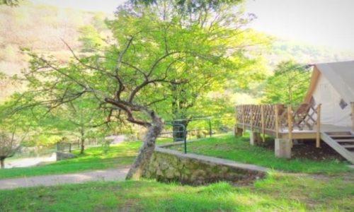arbre la palhère